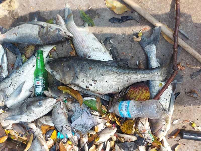 Milhares de peixes foram retirados da Lagoinha após chuva ácida