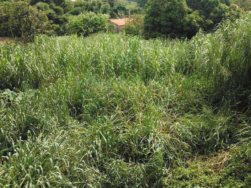 Este Terreno sujo de mato e detritos preocupa moradores da Av. Delfim Moreira no Centro de Paraíso
