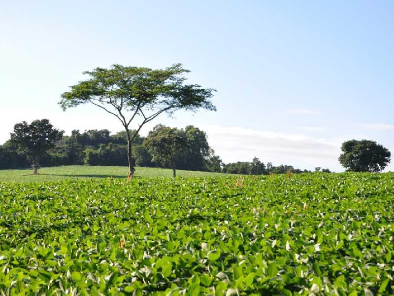 Região da Itaguaba é uma das áreas que mais registrou crescimento nas lavouras de soja no município
