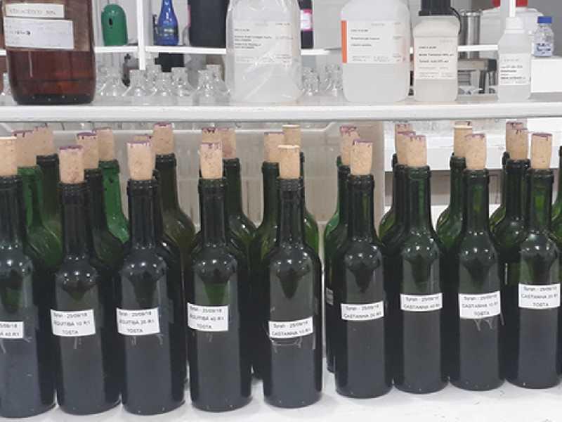 Pesquisa avalia uso de madeiras brasileiras para envelhecimento de vinho, inclusive com uva produzida em Paraíso