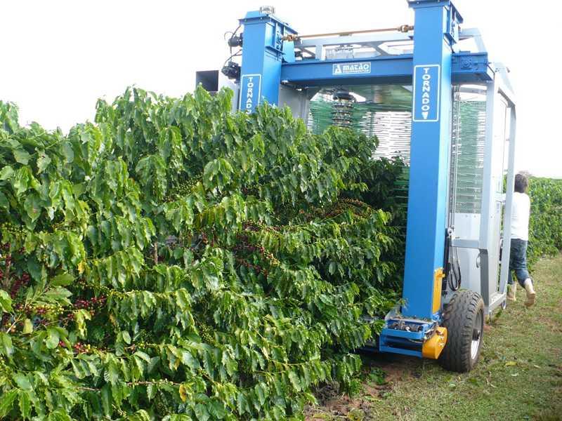 Dentre os resultados já registrados, foi percebido aumento de eficiência na mecanização da colheita