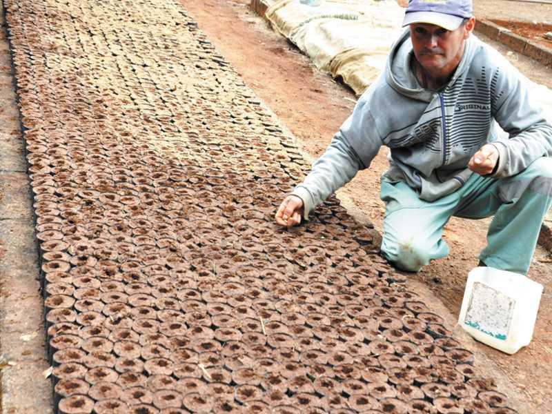 Milhares de mudas estão sendo cultivadas  no viveiro instalado no Parque da Serrinha