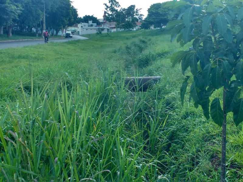 Ainda Continua a Sujeira de Matos e até Árvores nasceram dentro da Canalização do Córrego Coolapa