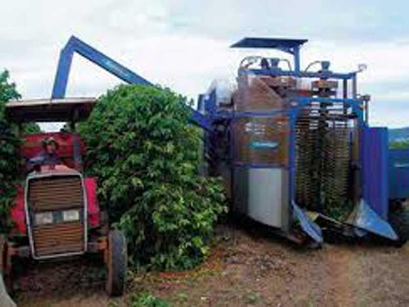 Maioria dos produtores estão optando pela colheita mecanizada do café no município