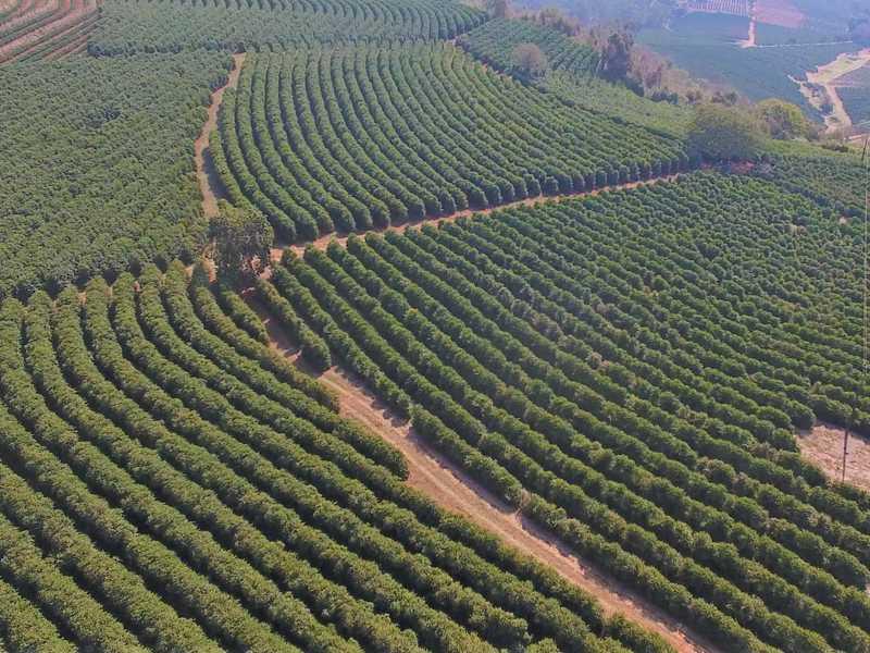Recursos são destinados para produtores de café e também de outras culturas cópia