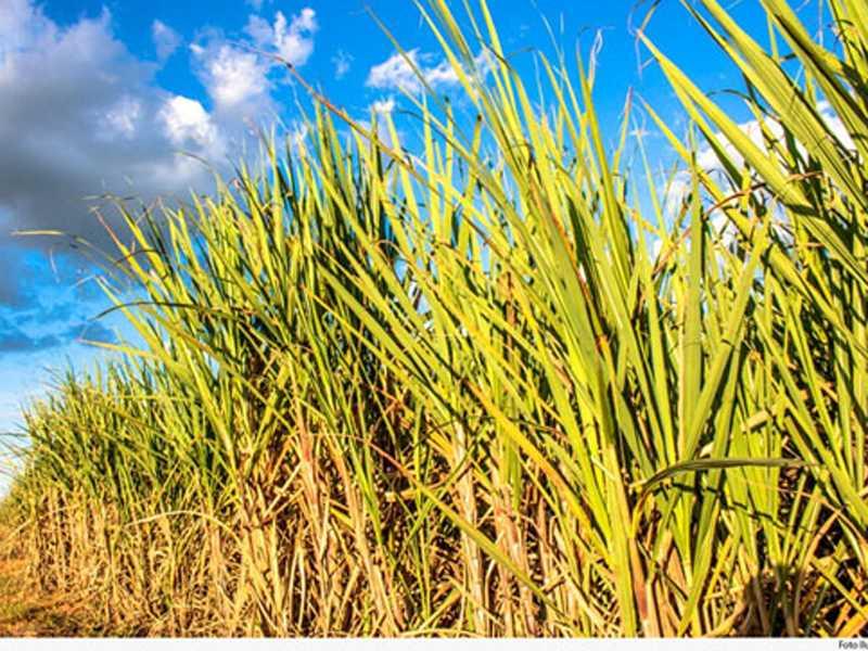 Área foi degradada pelo plantio de cana-de-açúcar