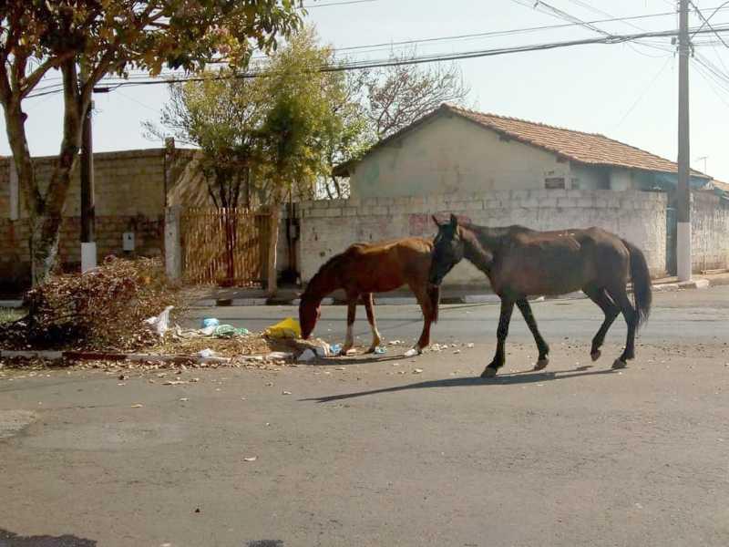 Neste Final de Semana, Cavalos estavam soltos perambulando na Av. Maestro Joaquim Souto, no Rosentina