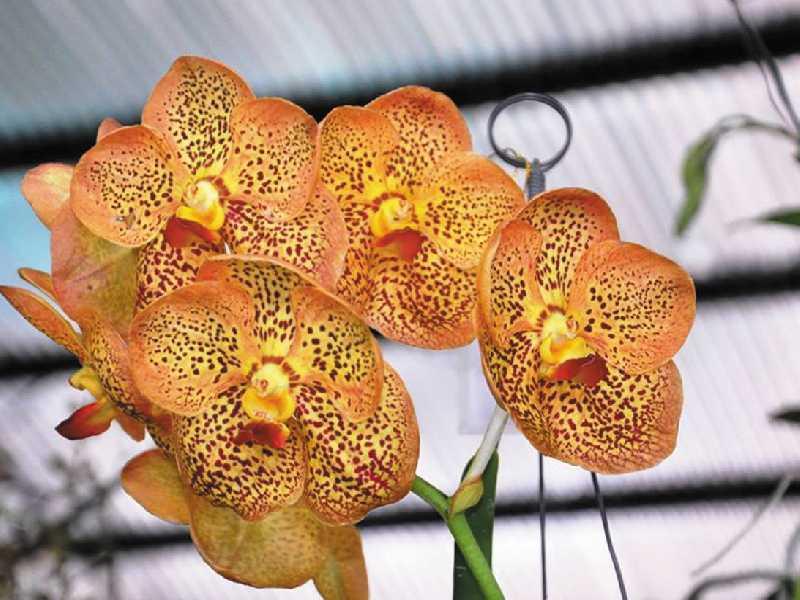 Na exposição que ocorre todos os anos em Paraíso o público depara com espécies comuns, mas também aprecia plantas exóticas todas de rara beleza