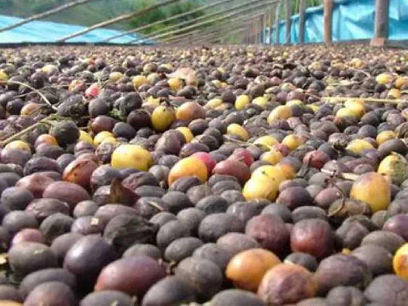 De acordo com pesquisa, agricultura fechou 2019 com R$ 34,8 bilhões. Café fechou o ano passado com R$ 9,8 milhões de produção