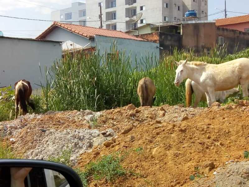 Cavalos soltos pastando em um terreno vago na Av. Dep. Delson Scarano, bem próximo do Centro de Paraíso