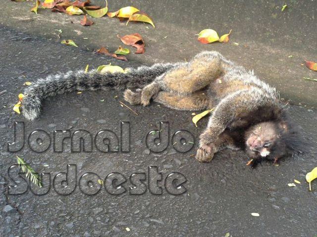 Macaco da esp